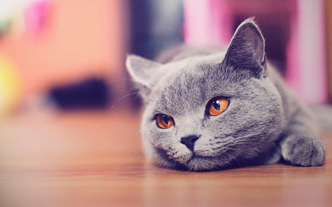 gato-schrodinger-viajeros-en-el-tiempo