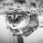 El gato de Schrödinger y los sistemas biológicos