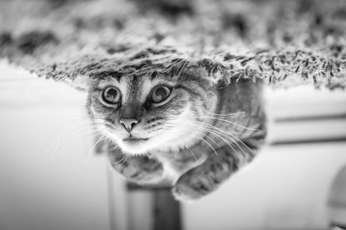 gato-de-schrodinger-viajeros-en-el-tiempo-